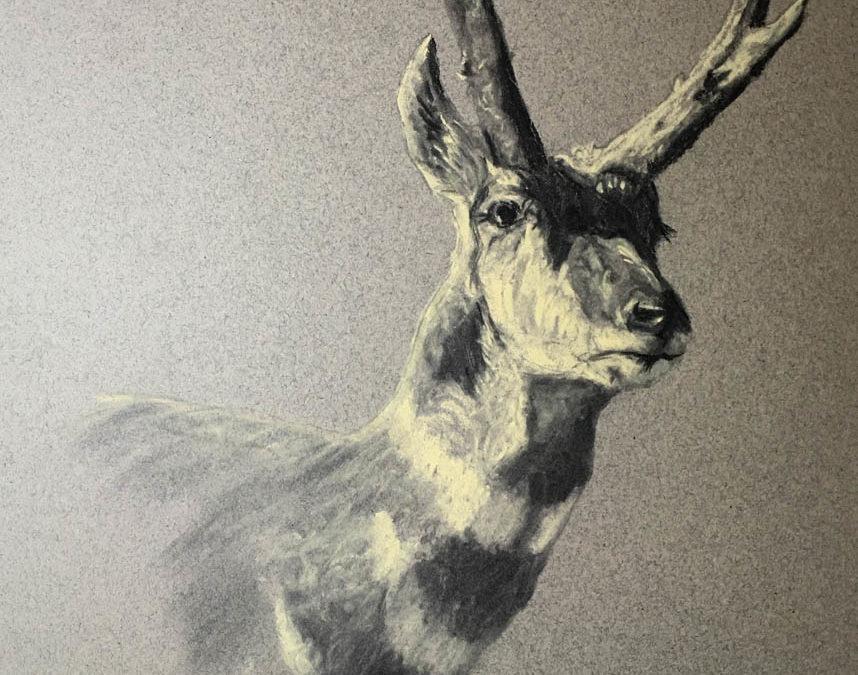 Wyoming Animal