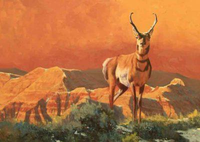 Badlands Antelope